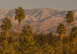 Image of mountains & palm trees