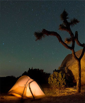 Tent against starry sky next to Joshua tree