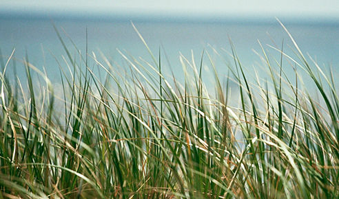 Close-up of tall grasses on beach.